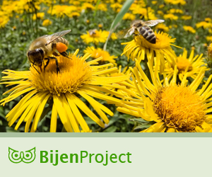 Bijenproject